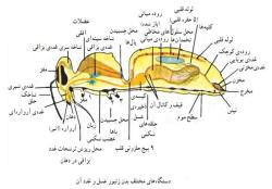 تحقیق در مورد زنبور عسل